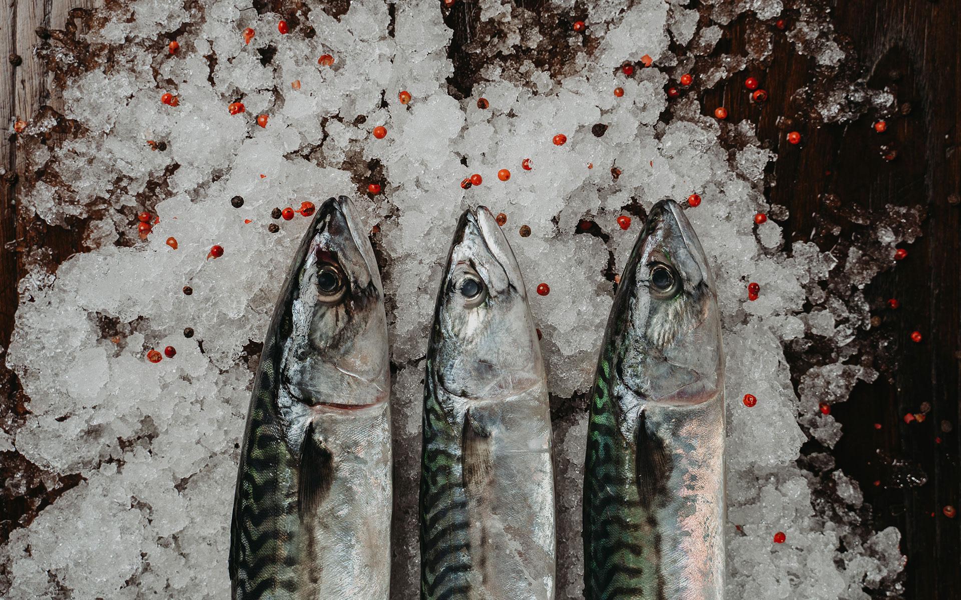 Intro – Home / Pescados